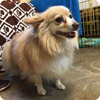 Adopt A Pet :: MARLEY - Elk Grove, CA