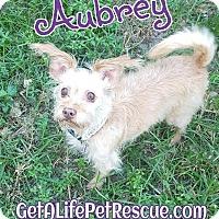 Adopt A Pet :: Aubrey - Wellington, FL