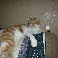 Adopt A Pet :: RANDY - Acme, PA
