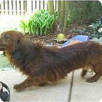 Adopt A Pet :: Naomi - Mooy, AL