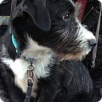 Adopt A Pet :: Baker - Knoxville, TN