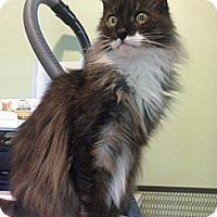 Adopt A Pet :: Nevaeh - Monroe, GA