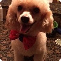 Adopt A Pet :: Felix - Ball Ground, GA