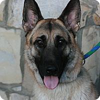 Adopt A Pet :: Max - Canoga Park, CA