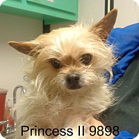Adopt A Pet :: Princess II - baltimore, MD