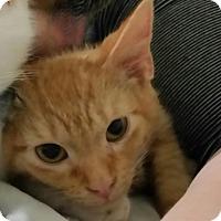 Adopt A Pet :: Callen - McDonough, GA