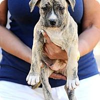 Adopt A Pet :: Montana - Mission Viejo, CA