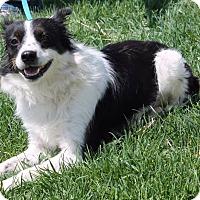 Adopt A Pet :: Tippy - Lebanon, CT