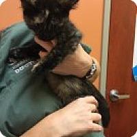 Adopt A Pet :: Rosie - McHenry, IL