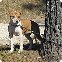 Adopt A Pet :: FERGIE - Hartford, CT