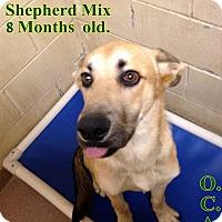Adopt A Pet :: 2-3 Oasis - Triadelphia, WV
