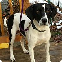 Adopt A Pet :: Chloe - Howell, MI