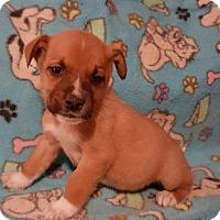Adopt A Pet :: Mack - Sussex, NJ