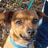 Adopt A Pet :: Scooby - Erwin, TN