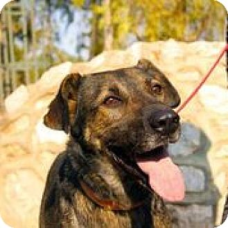 Shepherd (Unknown Type) Mix Dog for adoption in Toronto, Ontario - FLIPPE