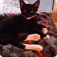 Adopt A Pet :: Samantha May - Seminole, FL