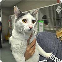 Adopt A Pet :: Izzie - Raleigh, NC