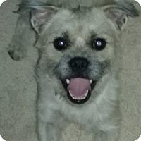 Adopt A Pet :: Teddy - Clear Brook, VA