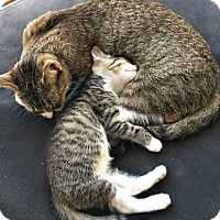 Adopt A Pet :: Alice & Rosia, adorable mother-daughter super-duo! - Brooklyn, NY