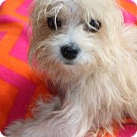 Adopt A Pet :: Lark - Woonsocket, RI