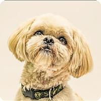 Adopt A Pet :: Teddy - San Luis Obispo, CA