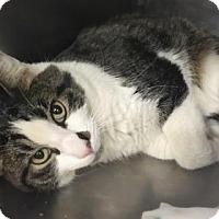 Adopt A Pet :: Lexington - Elyria, OH