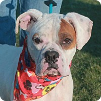 Adopt A Pet :: Prince Charming - Garfield Heights, OH