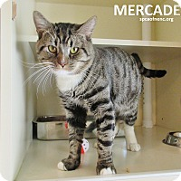 Adopt A Pet :: Mercadess - Elizabeth City, NC