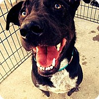 Adopt A Pet :: Deigo - Beaumont, TX