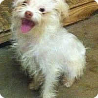 Adopt A Pet :: Punkin - Temecula, CA