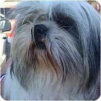 Adopt A Pet :: Candy Cane - Phoenix, AZ