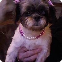 Adopt A Pet :: Abbey - Hilliard, OH