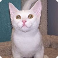 Adopt A Pet :: K-Emery2-Maxwell - Colorado Springs, CO