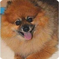 Adopt A Pet :: Oscar (RIP my dear boy!) - Houston, TX