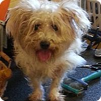 Adopt A Pet :: Roman - Clermont, FL