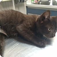 Adopt A Pet :: Alberta - Long Beach, NY