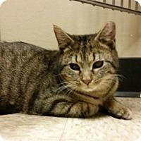 Adopt A Pet :: Charles - Colmar, PA