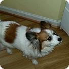Adopt A Pet :: Penny
