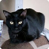 Adopt A Pet :: Jane - Saanichton, BC