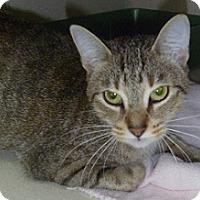 Adopt A Pet :: Mew Mew - Hamburg, NY