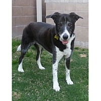 Adopt A Pet :: Jackson - Tempe, AZ