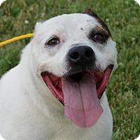 Adopt A Pet :: Timmie - Monroe, MI