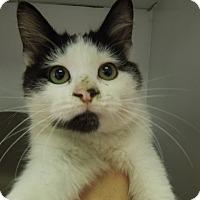 Adopt A Pet :: Opie - Medina, OH