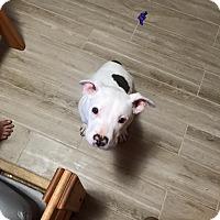 Adopt A Pet :: Kenai - Las Vegas, NV