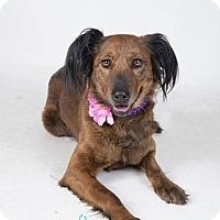 Adopt A Pet :: Coco - Rexford, NY