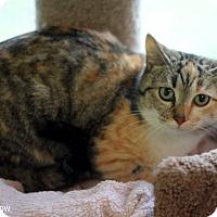Adopt A Pet :: Rainbow - Dalton, GA