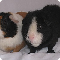 Adopt A Pet :: Hanna (Sanctuary Foster) - Monrovia, MD