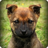 Adopt A Pet :: Mitsy~ meet me! - Glastonbury, CT