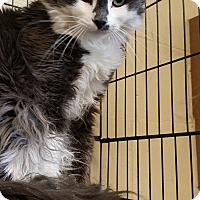 Adopt A Pet :: Pahana - Kensington, CT