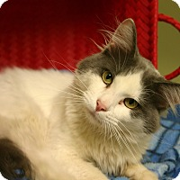 Adopt A Pet :: Gizmo - Hastings, NE